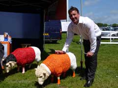 Blackpool Premier Sheep